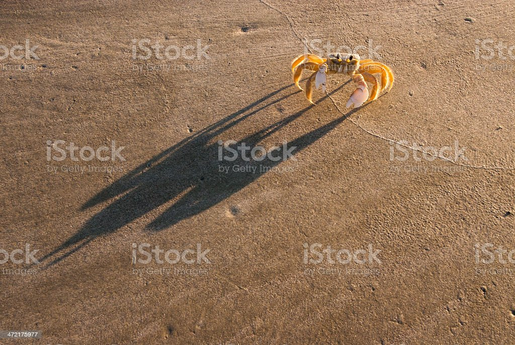 Ghost crab and his shadow stock photo