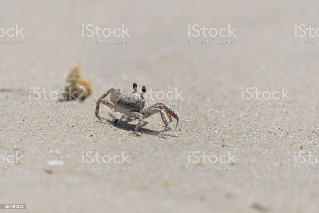 Ghost Crab Retreat stock photo