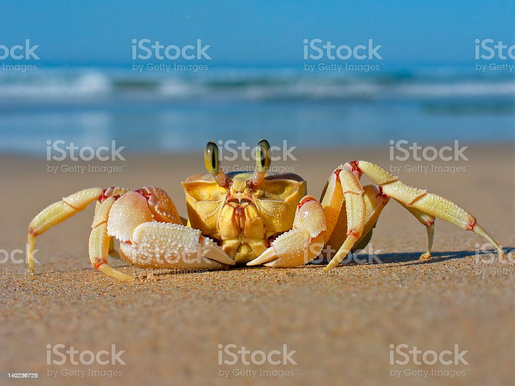 Ghost crab with beach background stock photo