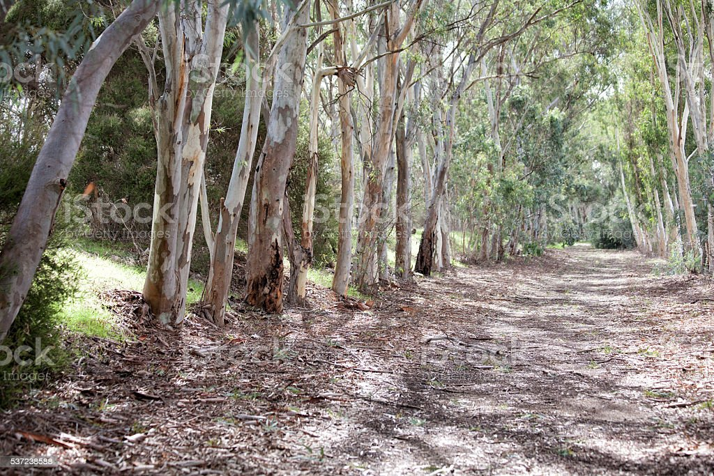 Ghost Gums stock photo