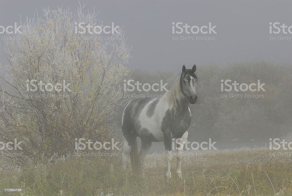 Ghost Horse royalty-free stock photo