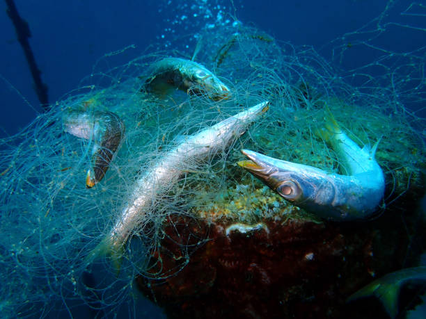 Ghost nets are commercial fishing nets that have been lost abandoned picture id1140339034?b=1&k=6&m=1140339034&s=612x612&w=0&h=yi4obdgbmtidlfhidywycy4fe6t4fwkcctimtkaaphk=