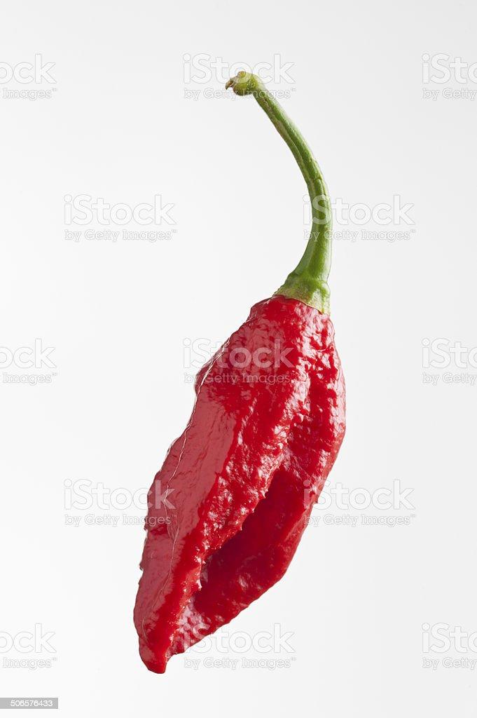 Ghost Pepper Bhut Jolokia stock photo