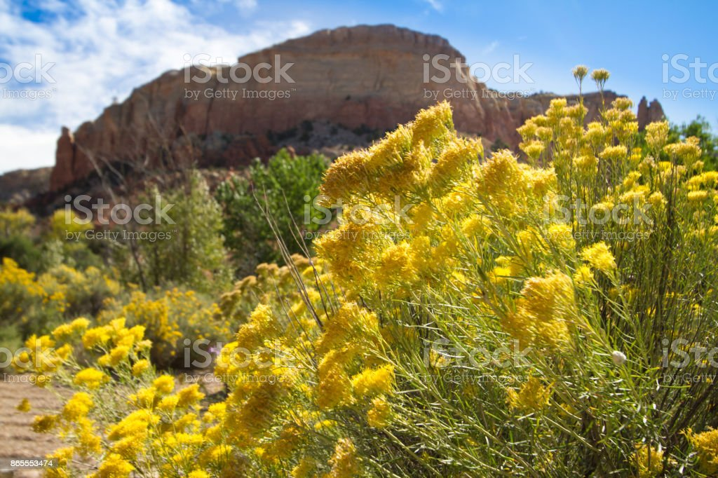 Ghost Ranch, NM; Chamisa/Rabbit Brush and Rock Cliffs stock photo
