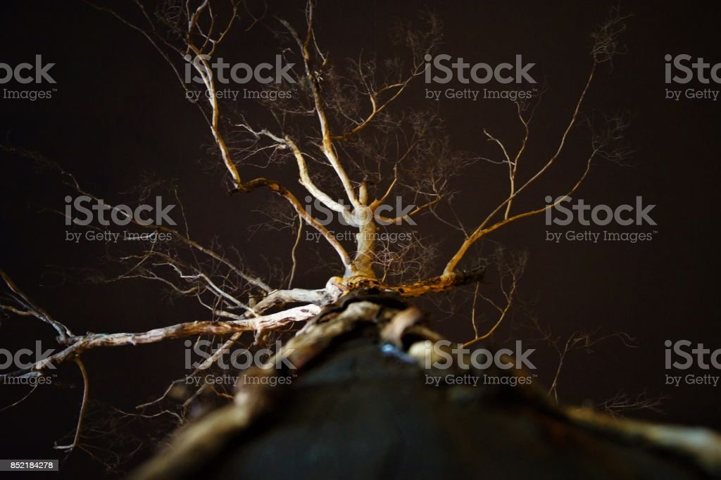 Ghost Tree stock photo