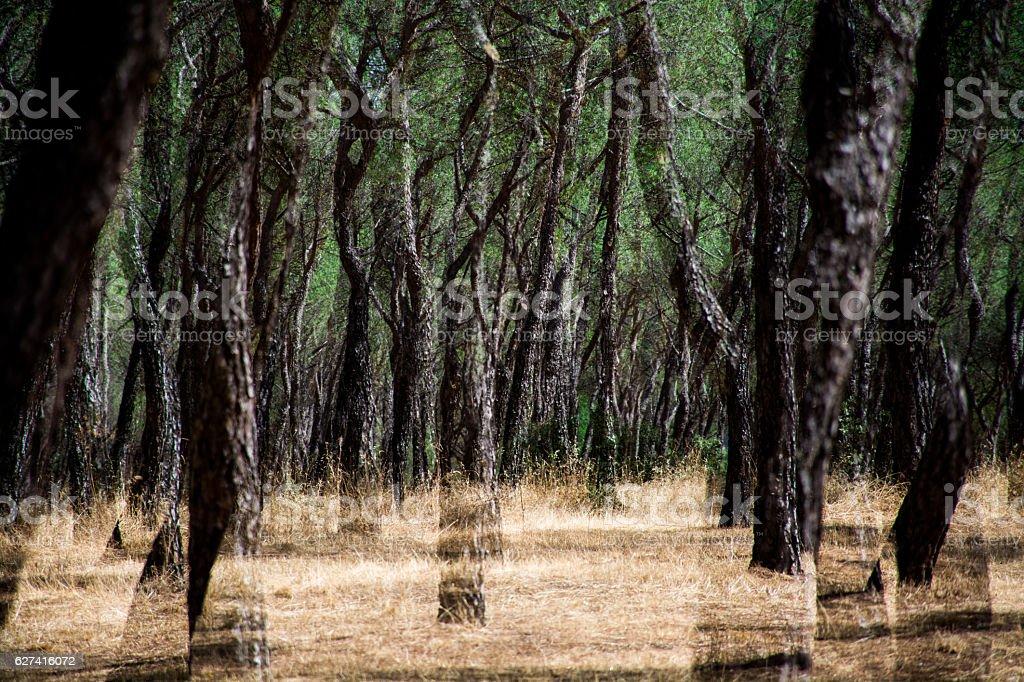 ghosts in the woods foto de stock libre de derechos