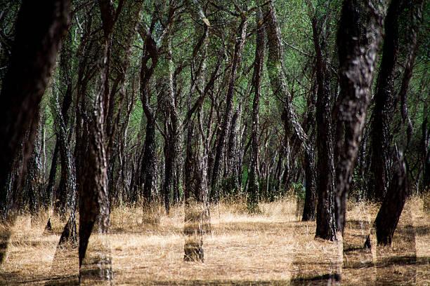 ghosts in the woods - foto de stock
