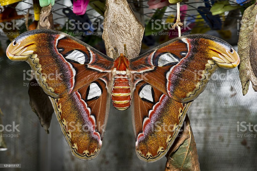 Giant Butterfly stock photo