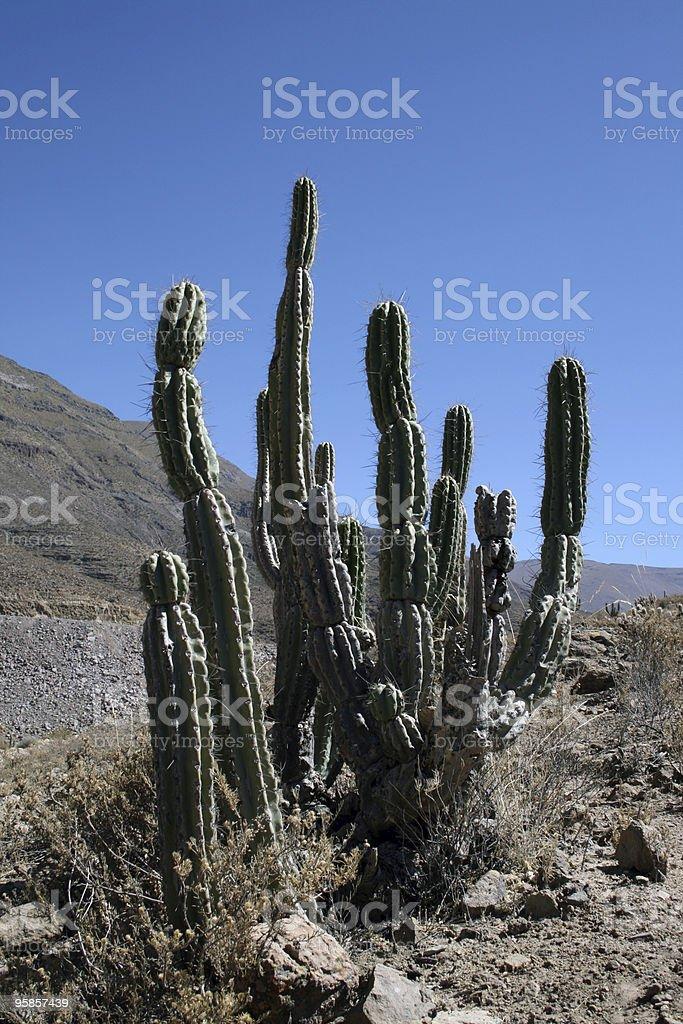 Riesigen Kaktus in Richtung strahlend blauem Himmel – Foto