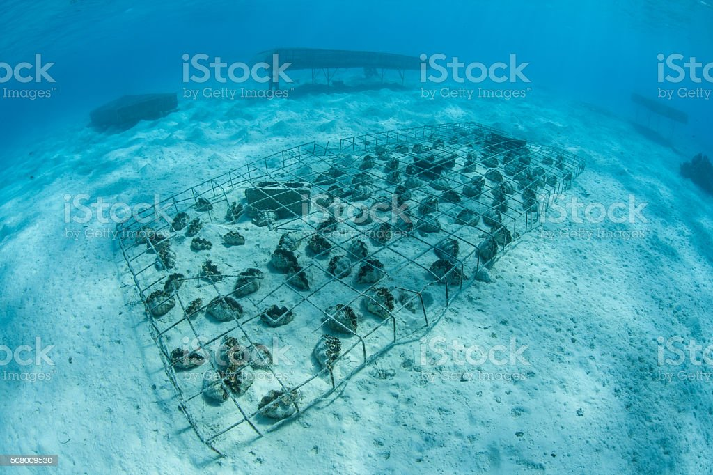 Giant Clam Farm In Cook Islands Stock Photo & More Pictures of ...