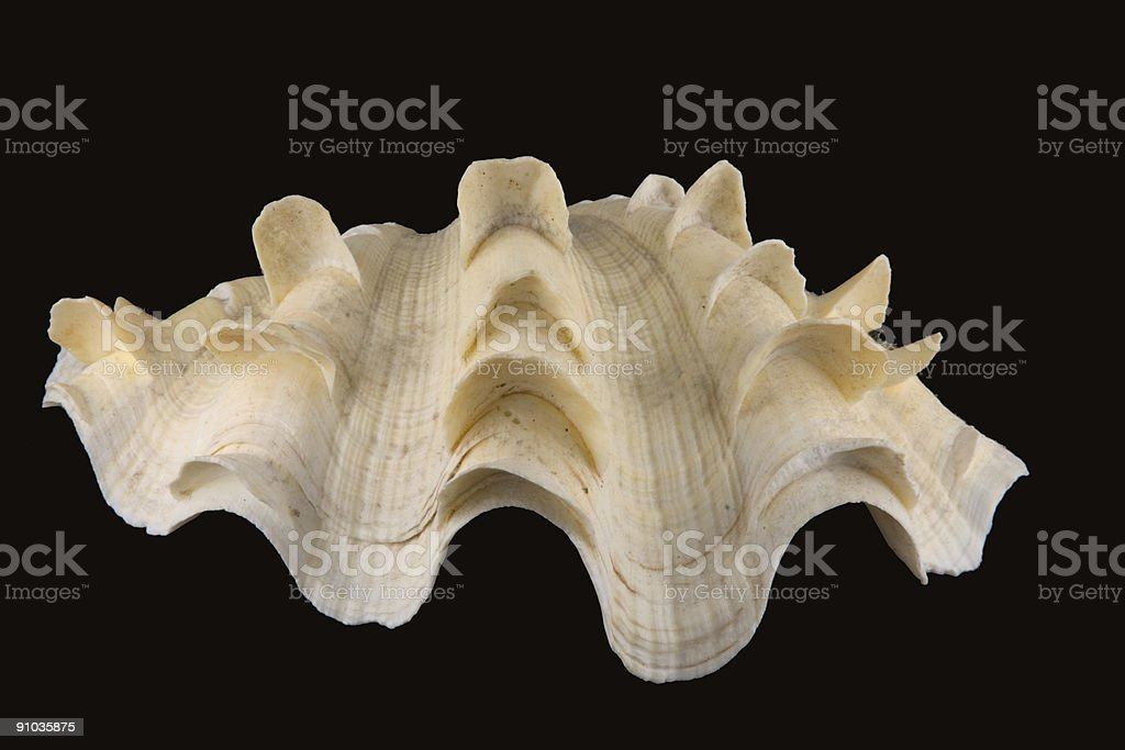 Giant Clam Shell Stock Photo More Pictures Of Anatomy Istock