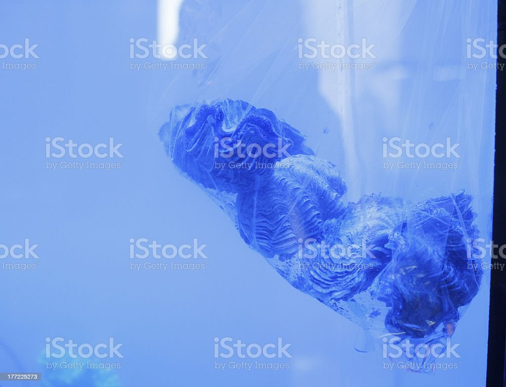 Giant clams on plastic bag royalty-free stock photo