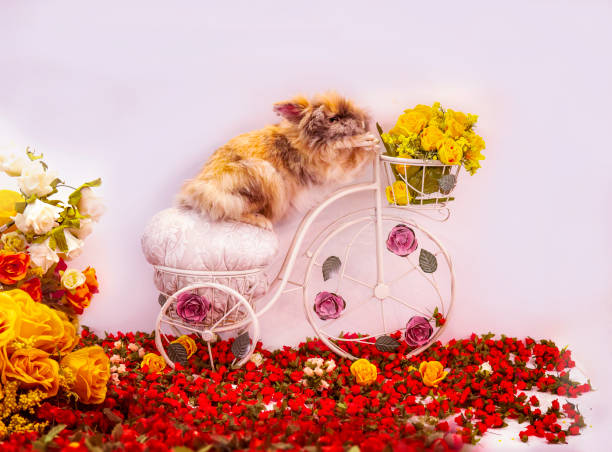 Giant Fluffy Special Easter Bunny Rabbit Riding Bicycle With Easter Basket And Flowers stock photo