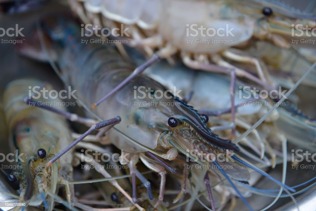 Giant Freshwater Prawn In Papua New Guinea Stock Photo - Download
