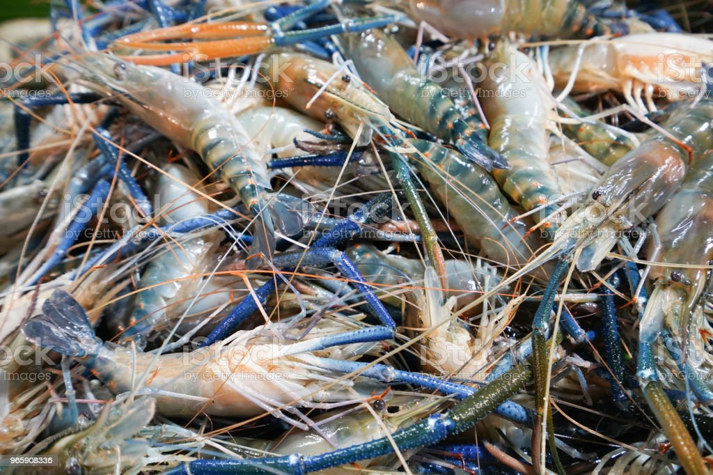 Giant freshwater prawn in the seafood market - Стоковые фото Большой роялти-фри