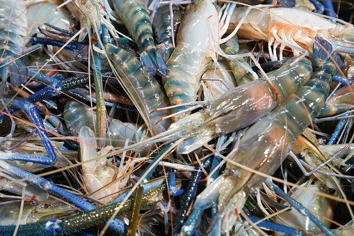 Giant Freshwater Prawn In The Seafood Market Stock Photo - Download Image Now