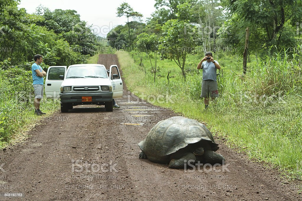 Giant Galapagos tortoise in Santa Cruz Island royalty-free stock photo