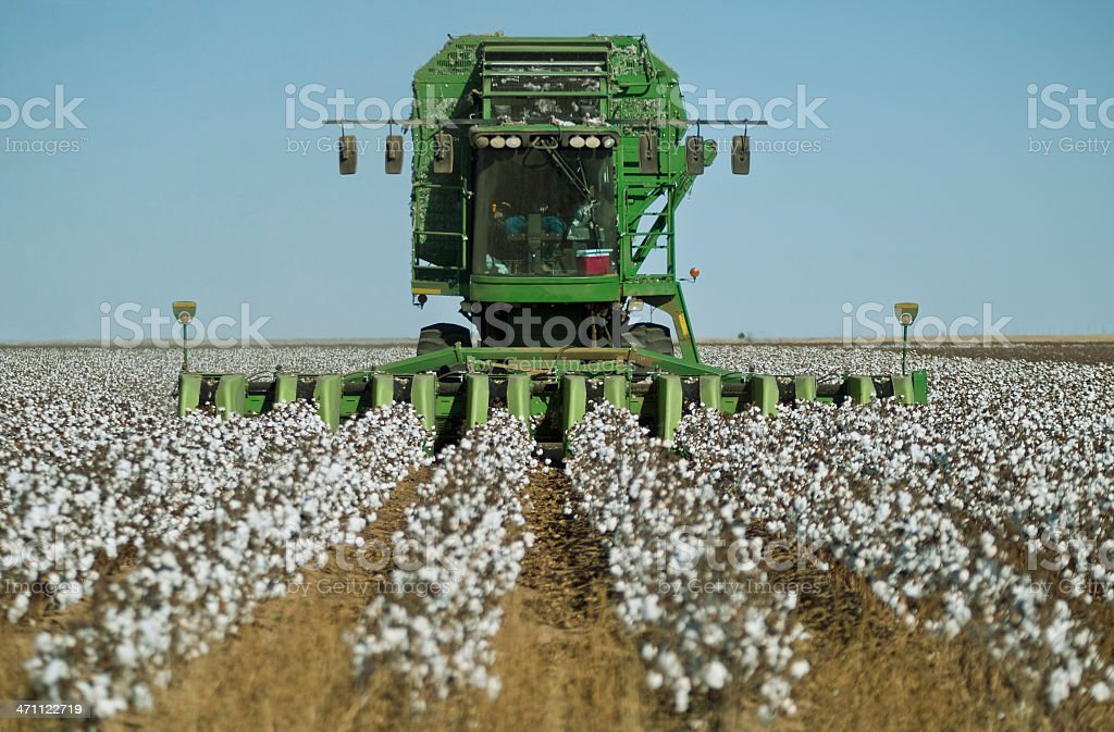 Giant green cotton stripper harvesting mature cottons stock photo