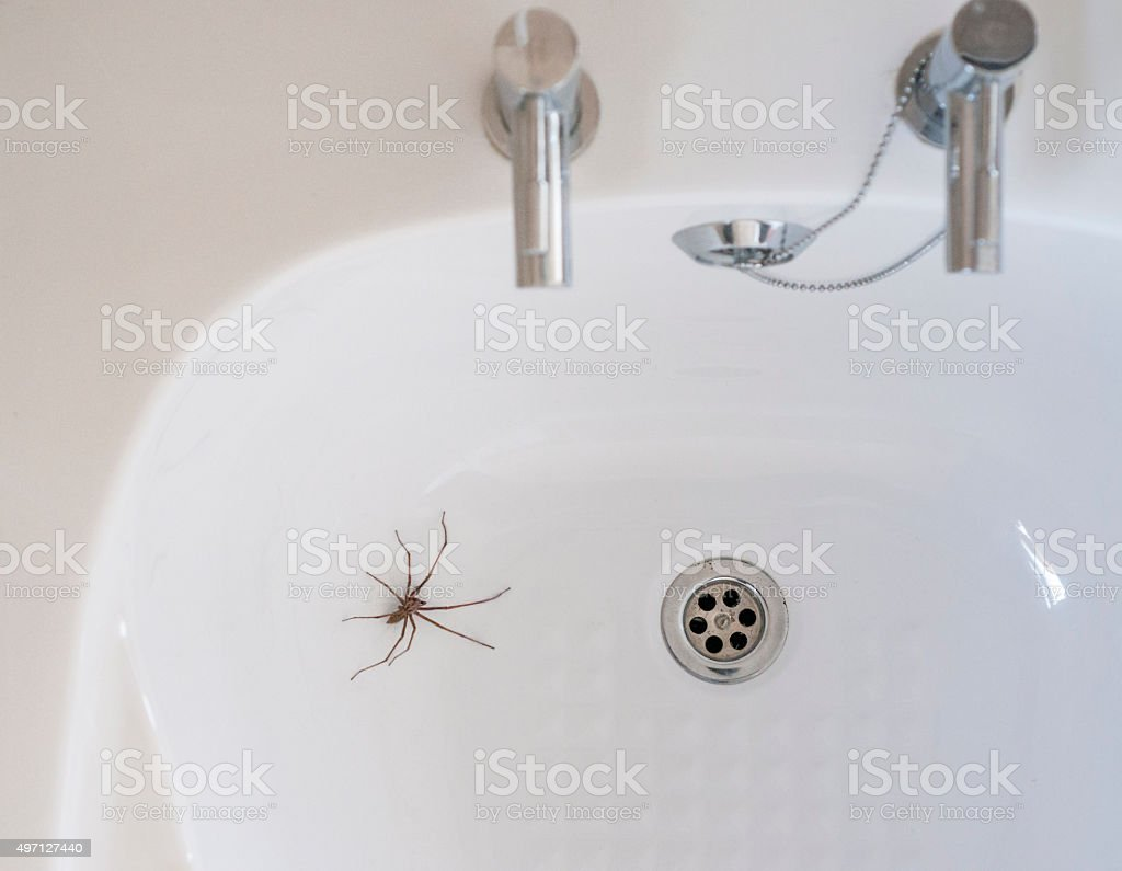 Giant House Spider In A Bathroom stock photo