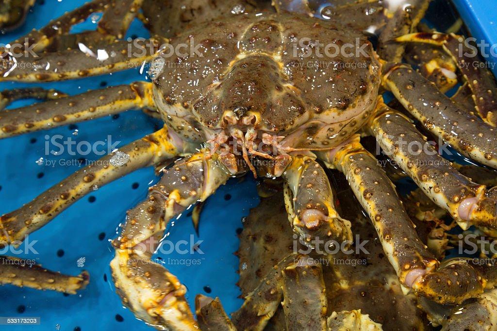 Giant  King Crab stock photo