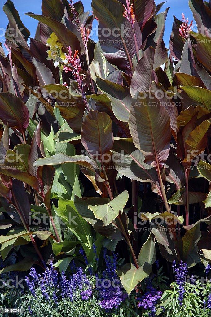 Giant lily royalty free stockfoto