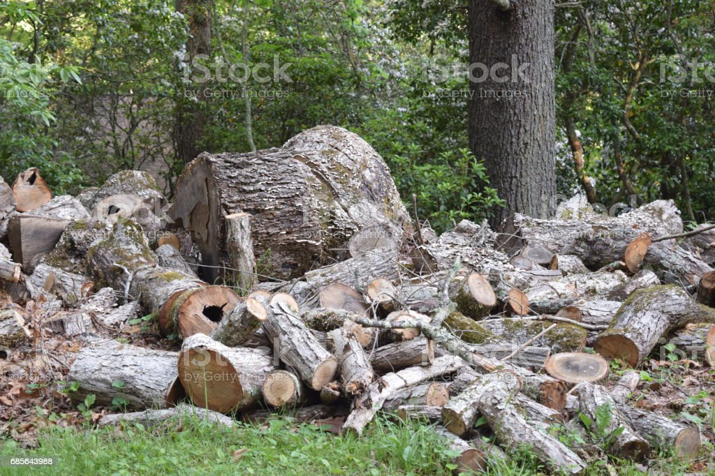 Giant log and a log pile stock photo