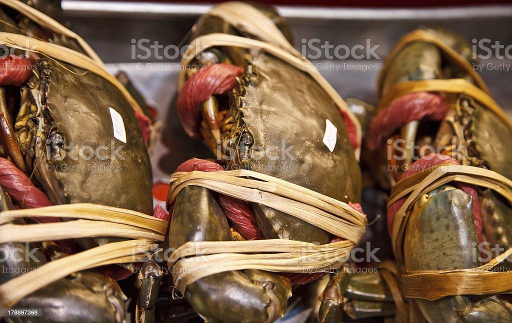 Giant mud crab royalty-free stock photo