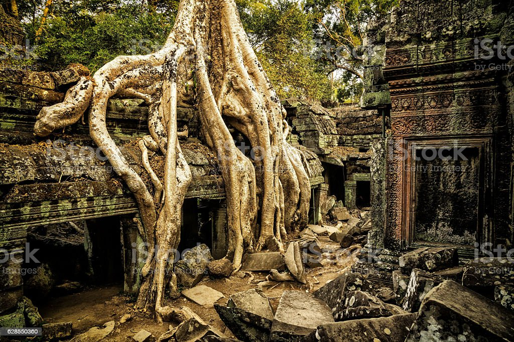 Giant Overgrown Root at Angkor Wat stock photo