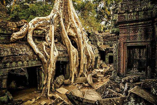 Giant Overgrown Root at Angkor Wat – Foto