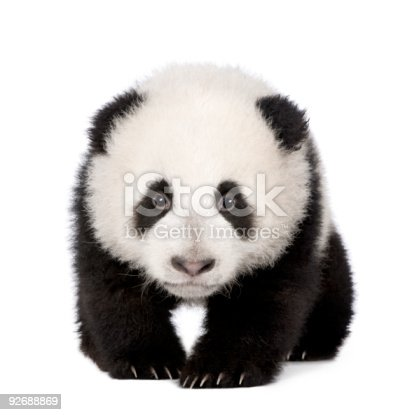 istock Giant Panda (4 months) 92688869