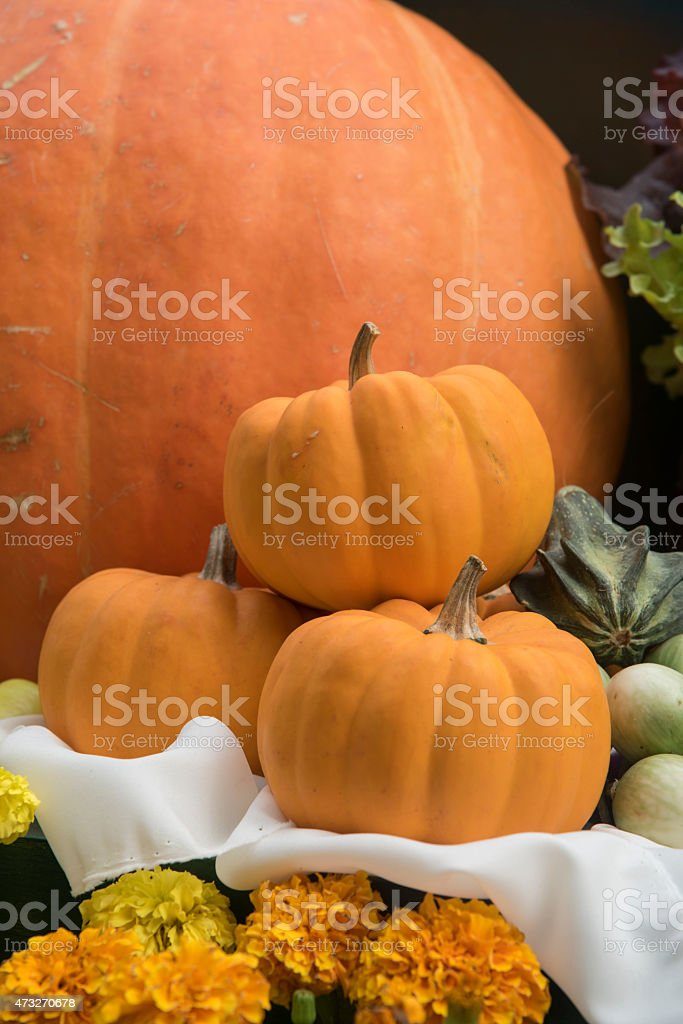 Giant pumpkin in vegetable farms. stock photo