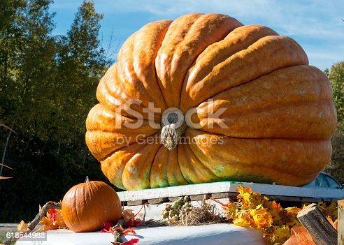 Giant pumpkin grown by local farmers weights 930 lbs on display at roadside out of a small village in Canada before Halloween.