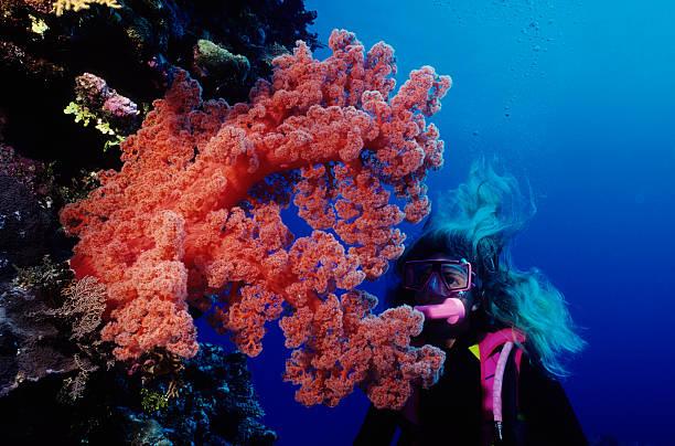 Riesige rote weiche Koralle – Foto