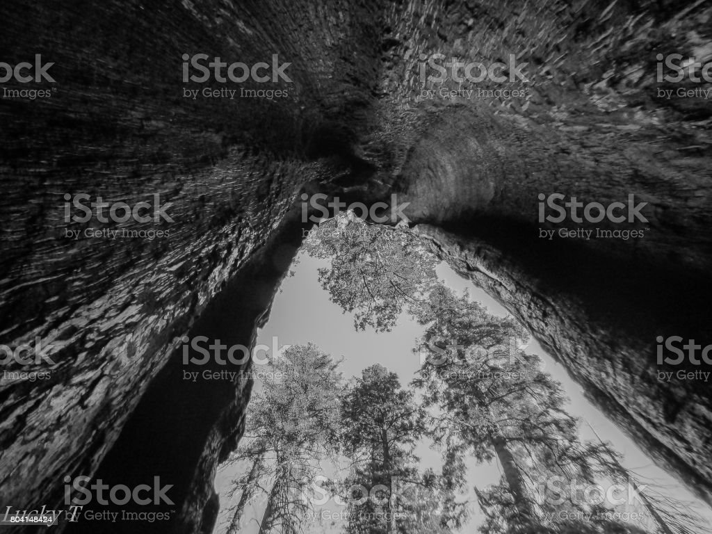 Giant Sequoia Monument and Generals Highway stock photo