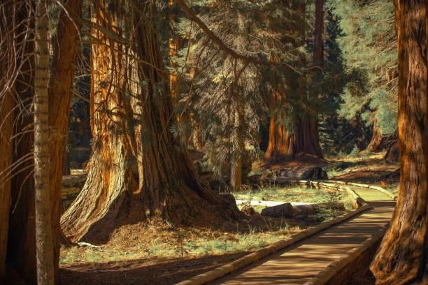 Giant Sequoias Trailheads stock photo