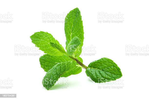 Photo of A giant sprig of lit mint on a white background