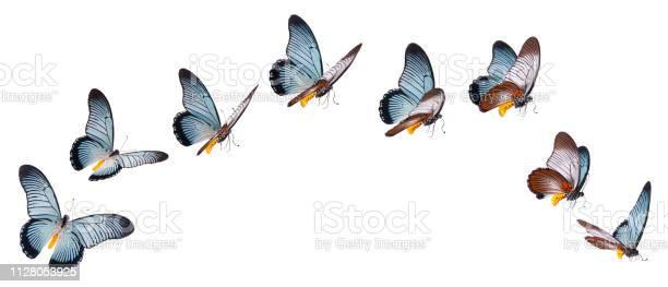 Giant swallowtail butterfly set isolated on white picture id1128053925?b=1&k=6&m=1128053925&s=612x612&h=v bpyp2mngbxsxcvrmjkivymu46vcx1ajho vfi7ixg=