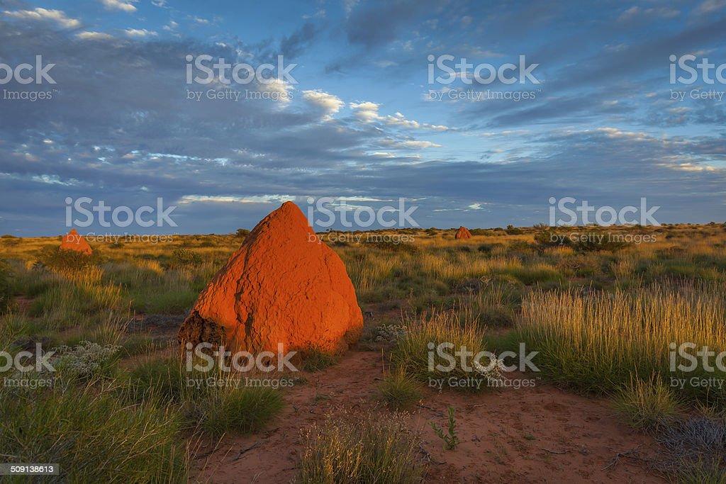 Giant Termite Mounds, Western Australia stock photo