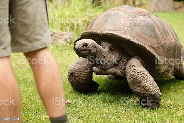 Giant tortoise picture id185211791?b=1&k=6&m=185211791&s=612x612&h=smfkan2d5awjxywhkikpsn4w1pd mrgimbtihizhvug=