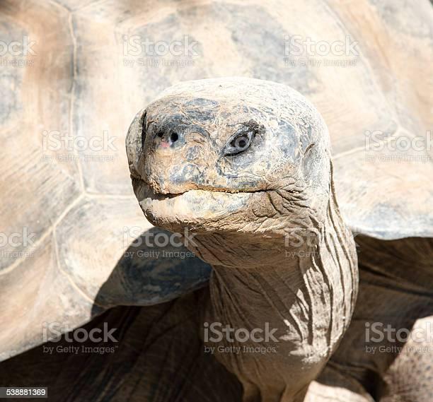 Giant tortoise picture id538881369?b=1&k=6&m=538881369&s=612x612&h=unggvjafynmm1dvvmebudvaau8e98xk 3vgruuwgrmy=
