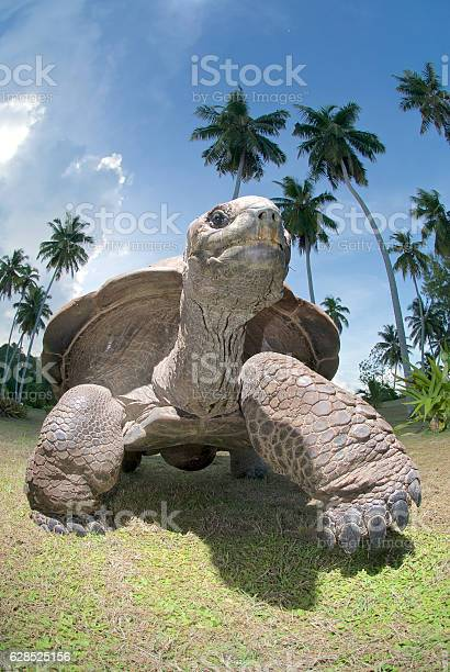 Giant tortoise picture id628525156?b=1&k=6&m=628525156&s=612x612&h=uorwmbpzk66ahapsui2smbleafiaufldrckdmgyfoy8=