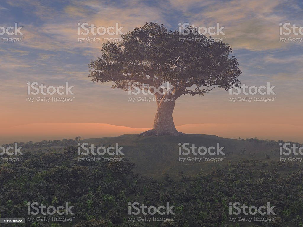 Giant tree stock photo