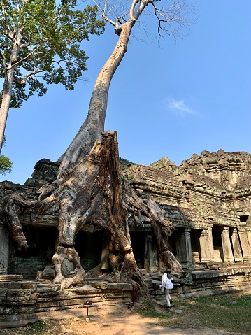 Siem Reap, Cambodia - January 20, 2020: Lone female tourist is exploring Preah Khan Temple. Preah Khan is a temple at Angkor, Cambodia, built in the 12th century by King Jayavarman VII to honor his father. It is left largely unrestored, with numerous trees and other vegetation growing among the ruins.