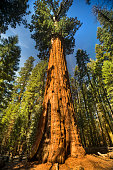 General Sherman tree in Sequoia National Park California USA