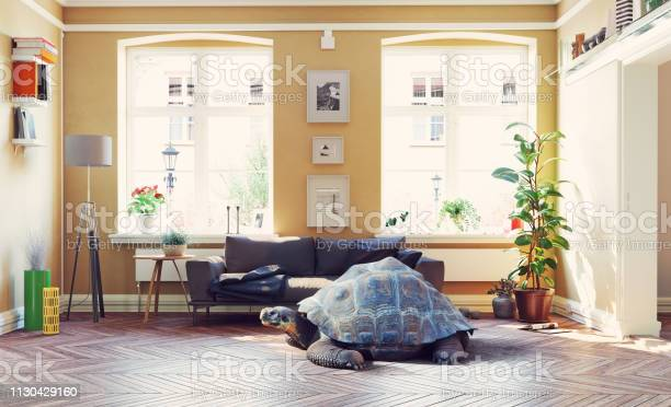 Giant turtle in the living room picture id1130429160?b=1&k=6&m=1130429160&s=612x612&h= n8mf6iybagjqjwq2 bjxen3m8 ck4 th30hr48vpey=