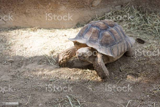 Giant turtle in the zoo park picture id1155868888?b=1&k=6&m=1155868888&s=612x612&h=acvrisfqm0dvtrolhszn9l9djnpliwzhjcdbfjmsmdk=
