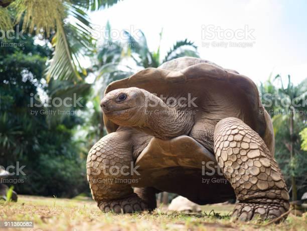 Giant turtle mauritius picture id911360582?b=1&k=6&m=911360582&s=612x612&h=zxnkofnasy1gohhcu7htlhe75vezxqc7rz1epkd68ra=