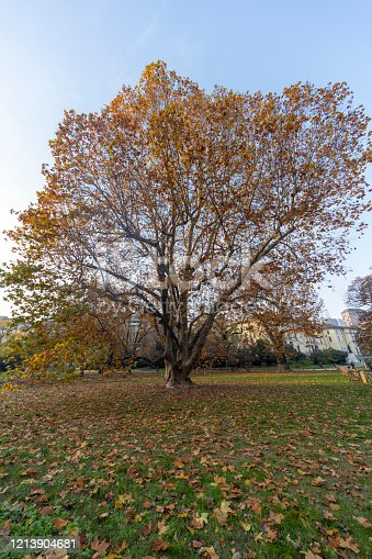 Milan, Lombardy, Italy: the public park known as Giardini Indro Montanelli  at fall (November). Foliage