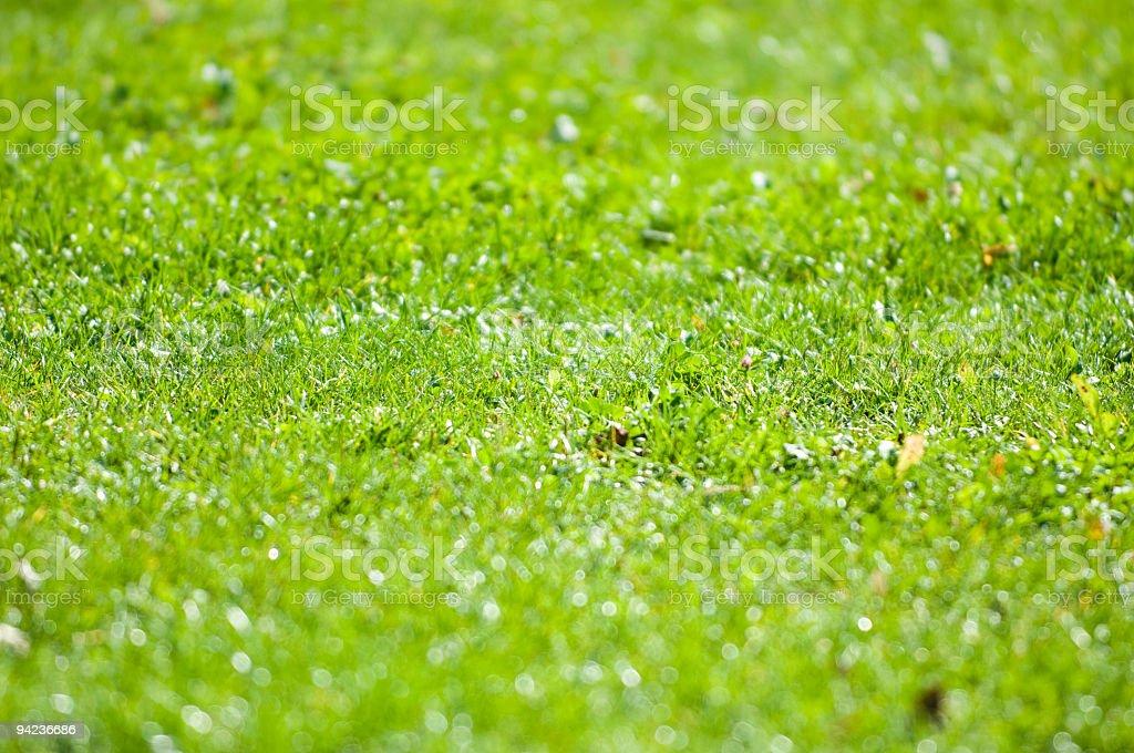 Giardino con effetto sfuocatura royalty-free stock photo