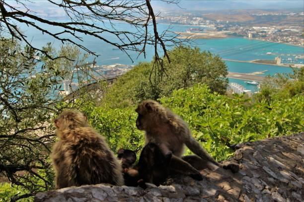 Gibraltar - rock of Gibraltar and monkeys stock photo